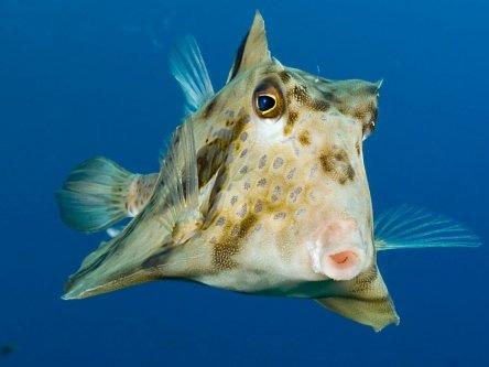 Radisson Tala Bay Red Sea Diving picture_2