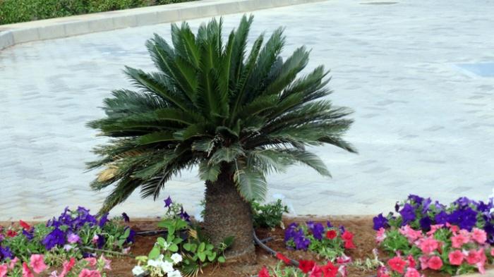 palmu ja kukat