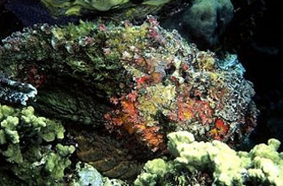 stonefish 2