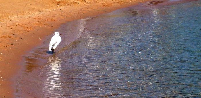 Haikarakin viihtyy rannalla