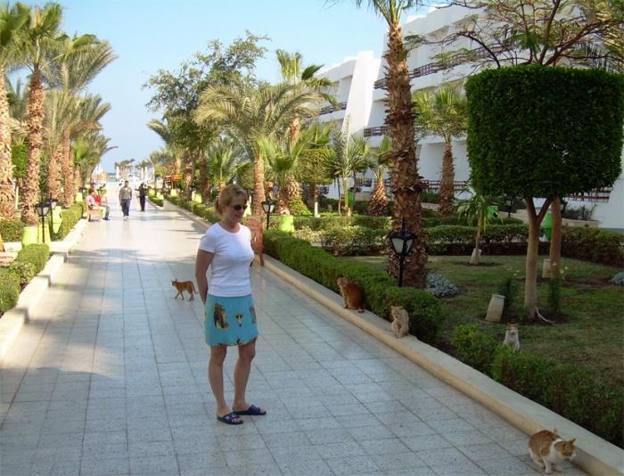 Hurghada_slight cat problem