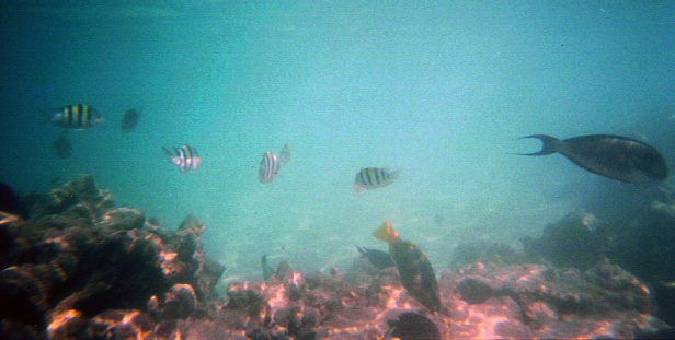 Sharm El Sheikh_kuva halvalla vedenkest kameralla_5