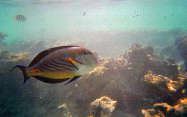 Sharm El Sheikh_toka kuva halvalla vedenkest kameralla