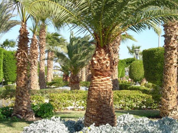 Hurghada hotel back yard palm trees