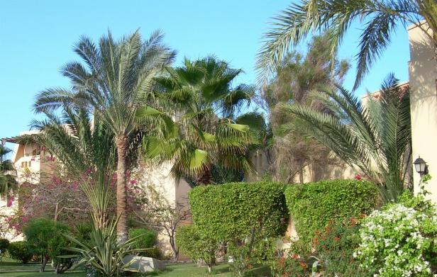 Coraya Bay Egypt_palm trees and flowers everywhere
