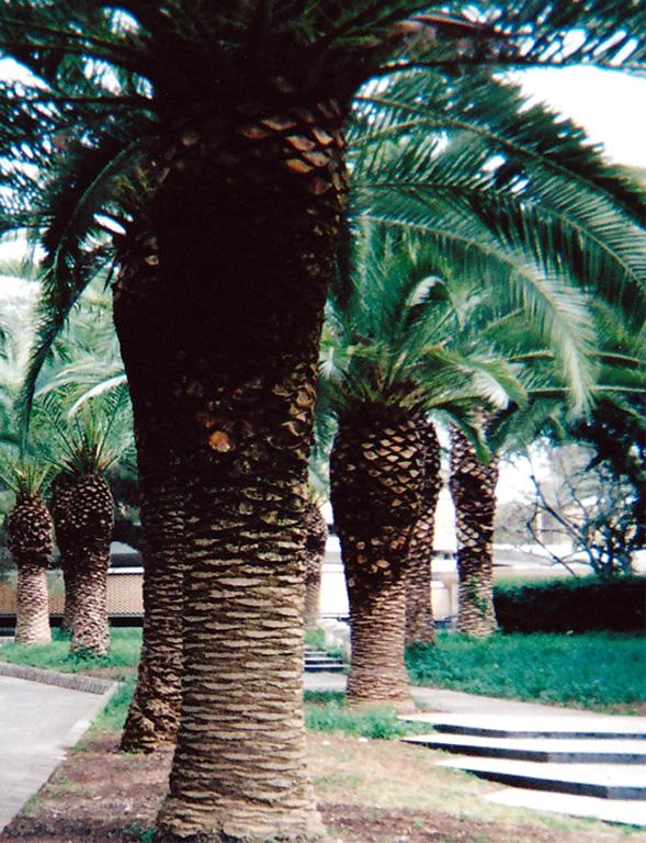 Syrakusa arkeologinen museo palmut