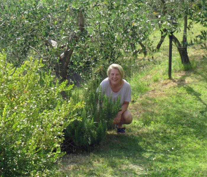 Montemagno huge rosemary bush