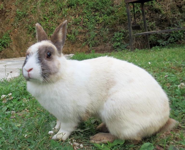 Osku the rabbit