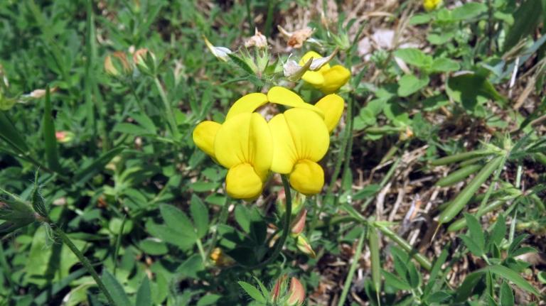Montemagno flora_1