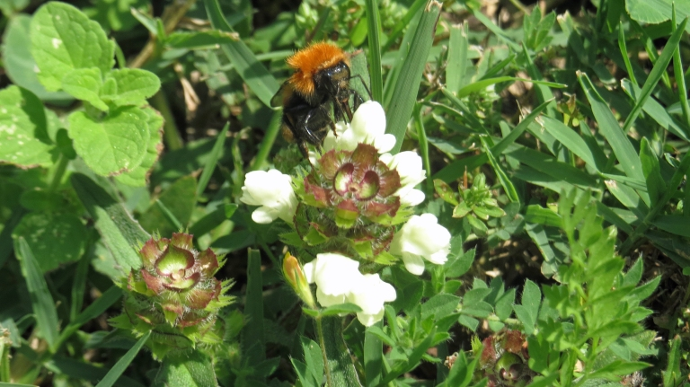 Montemagno flora_11