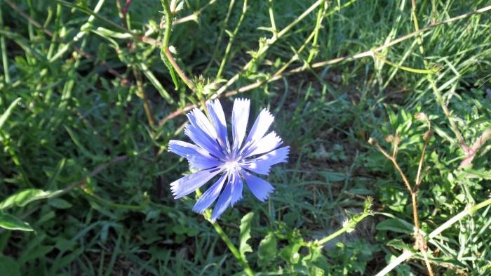 Montemagno flora_2