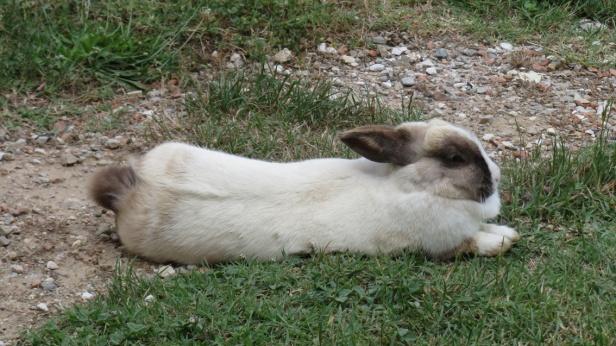 Sometimes Osku took a nap