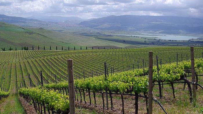 Sisilia viinitarha