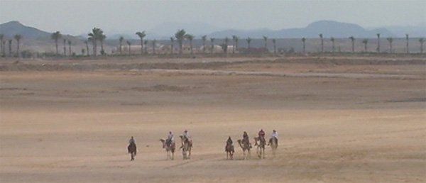 Across ICPG horses and camels