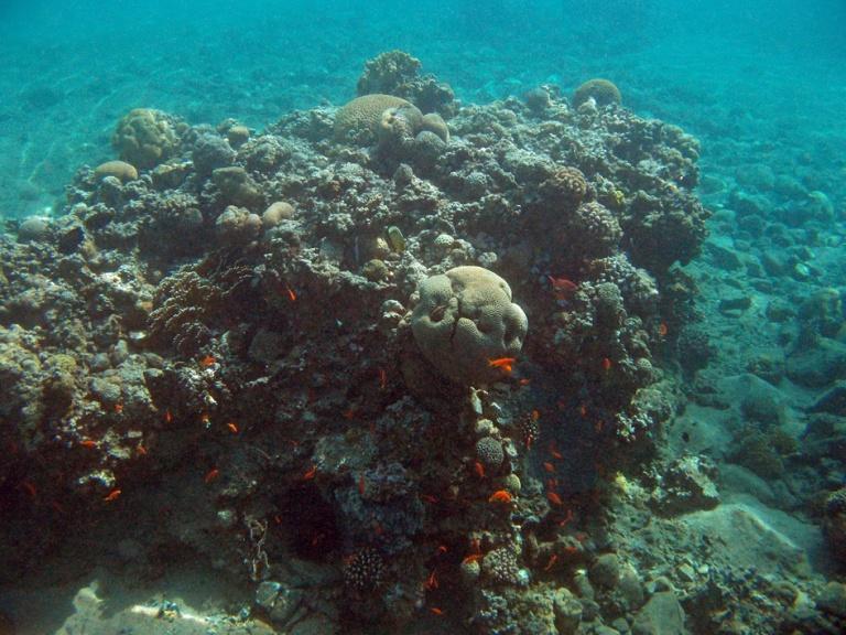 Upea kokonaiskuva Red Sea Tala Bay