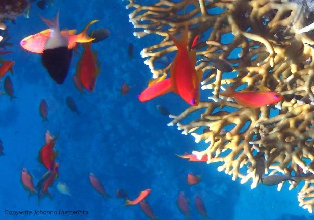 Red Sea sea life