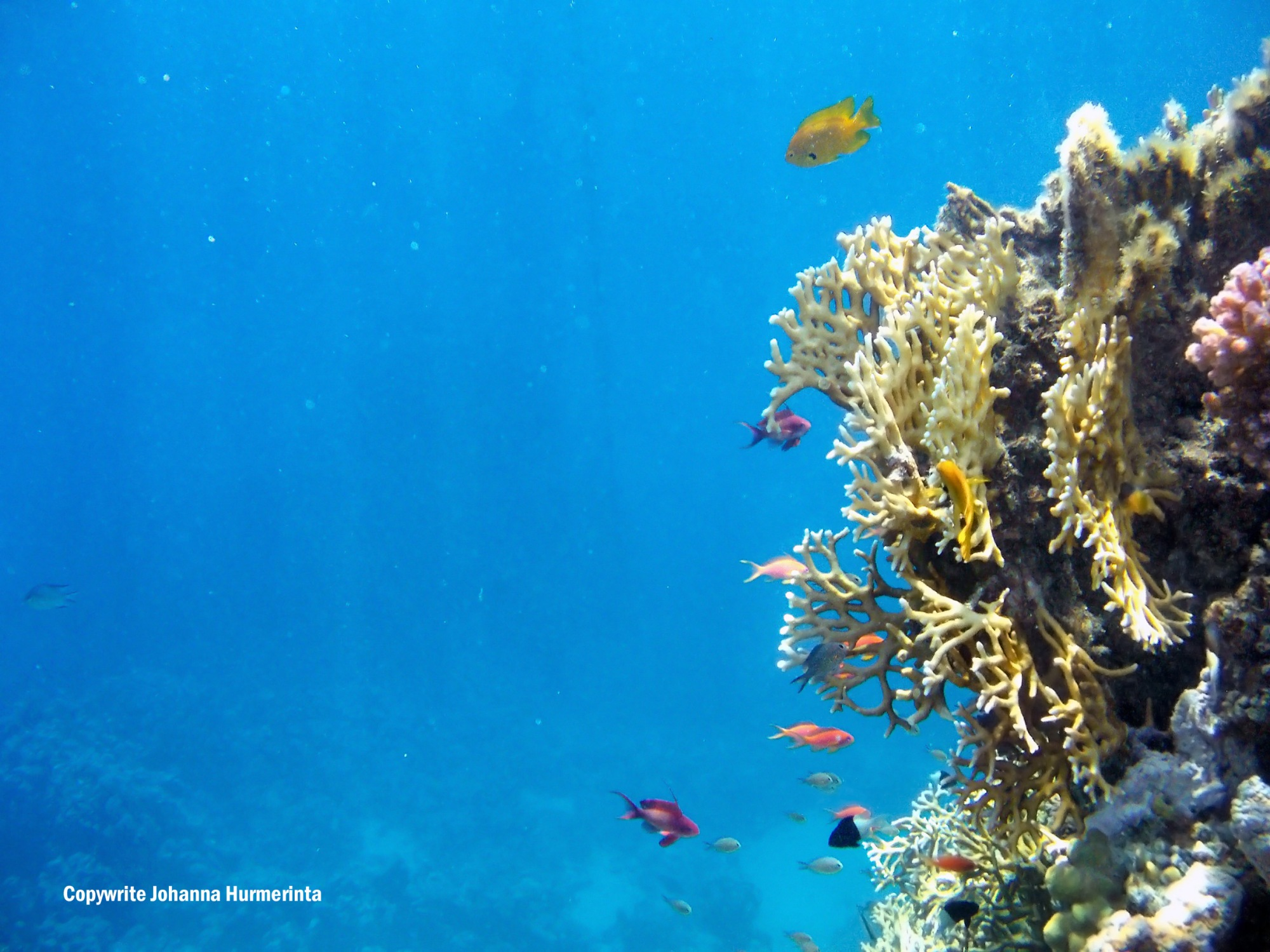 Red Sea Beauty_lots of small fish and corals_