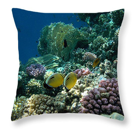 E Butterflyfish tyyny