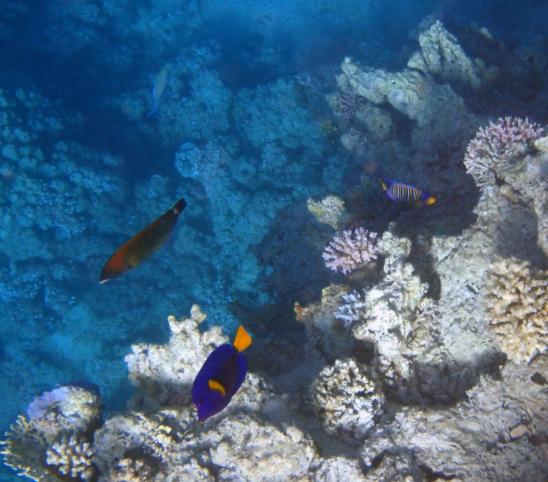 Beautiful Red Sea world