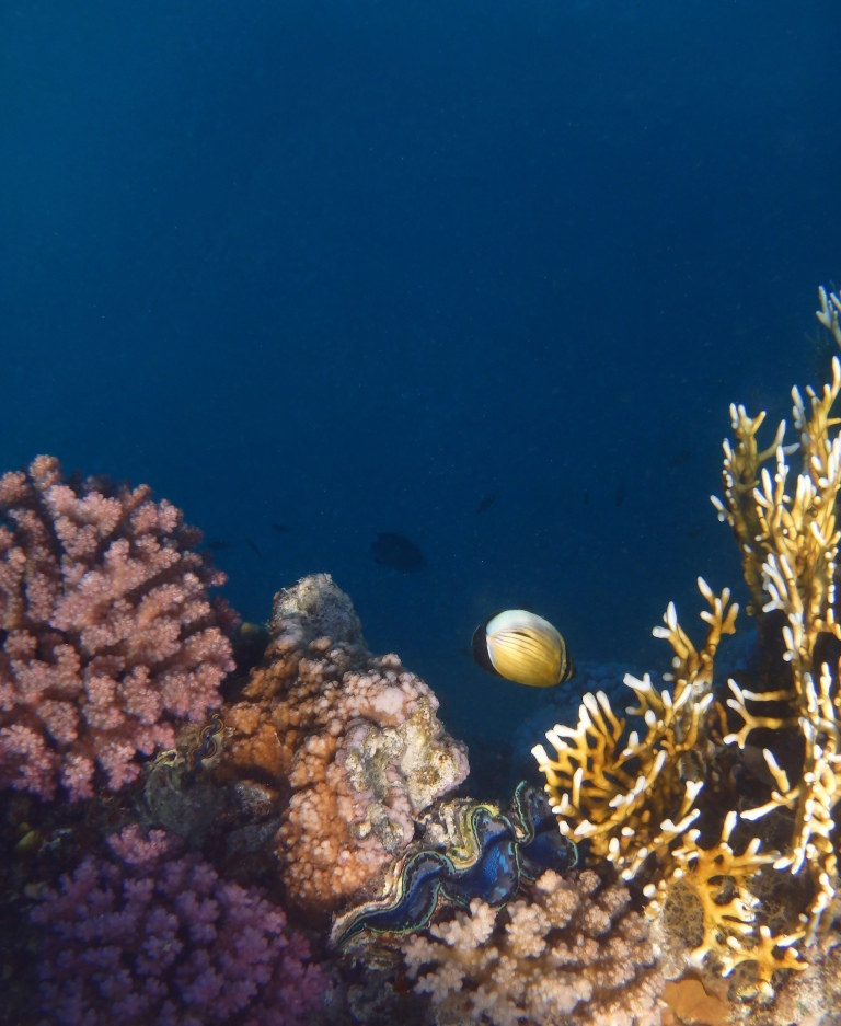 Beautiful and mysterious Red Sea World