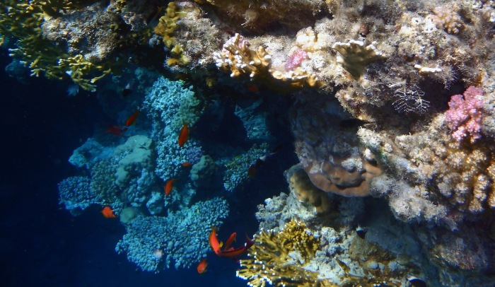 Small caves and color in the Red Sea.jpg