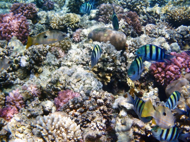 Fascinating Red Sea World