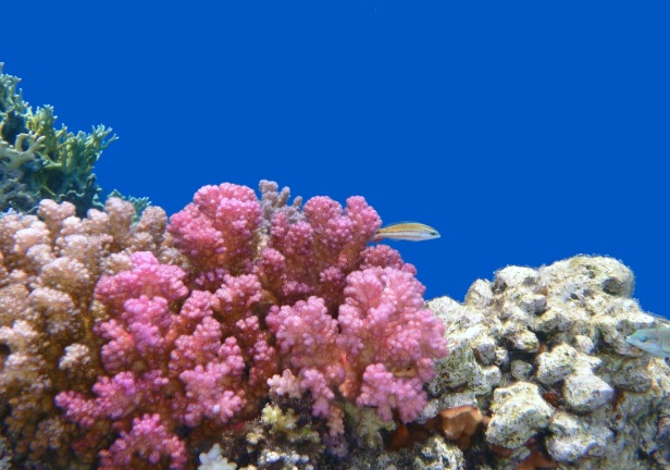 Silent Red Sea World