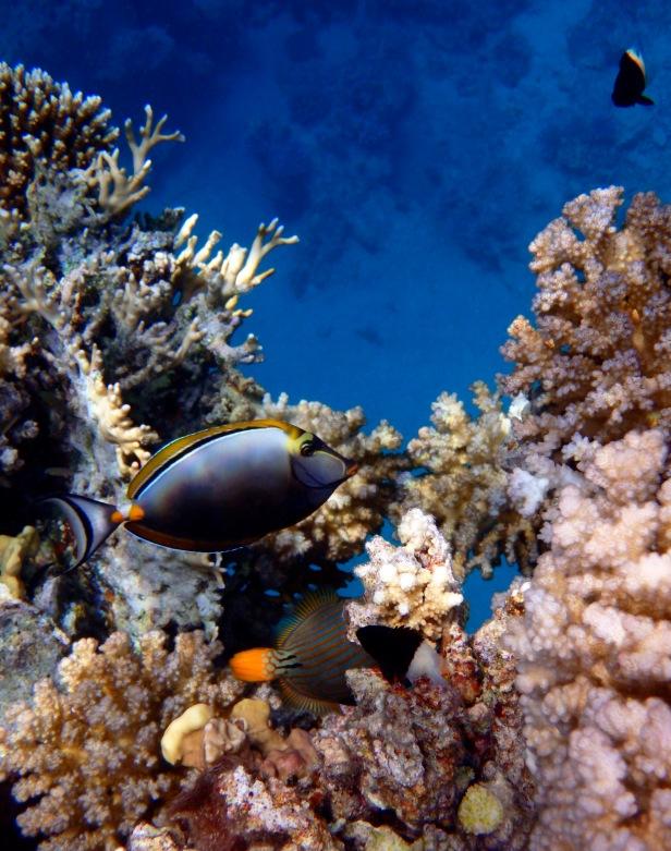 Magnificent Red Sea World