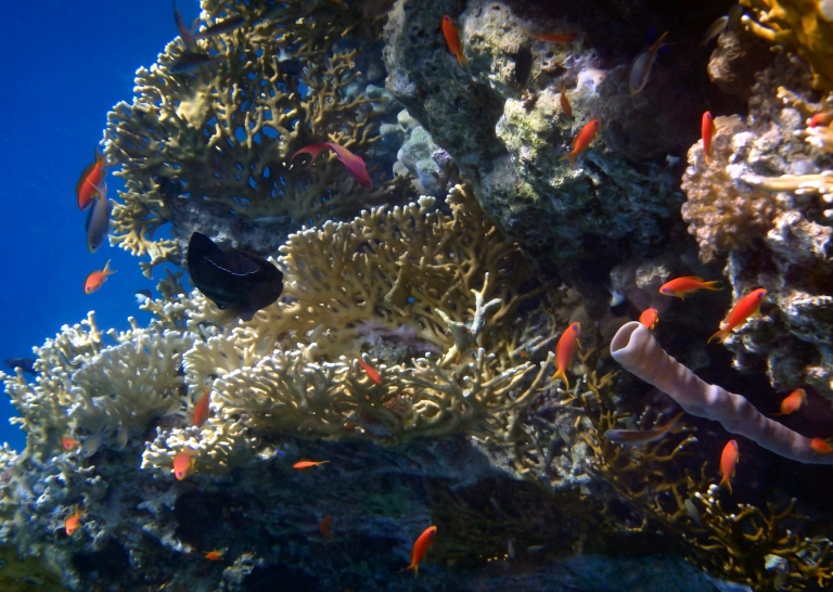 Mysterious Red Sea World 7