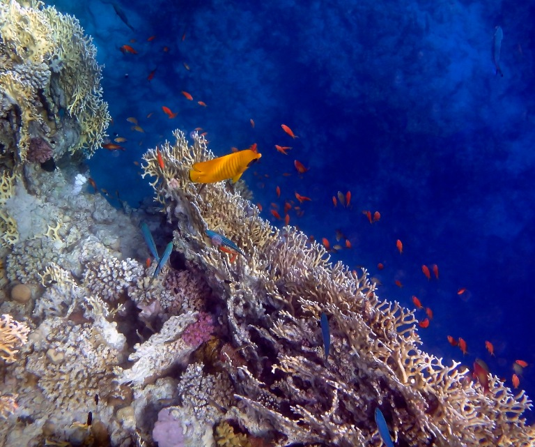 Amazing Red Sea 2