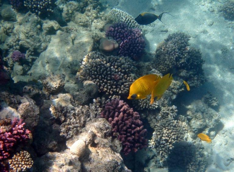 Red Sea Underwater World Sahl Hasheesh 2.jpg