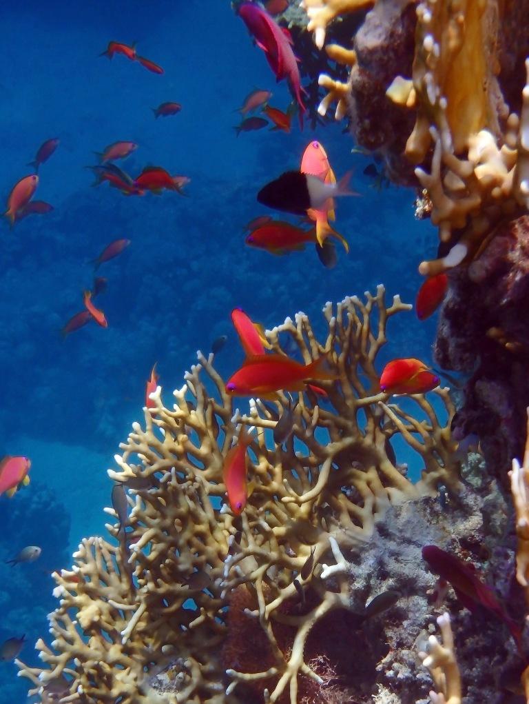 Happy Moment Underwater