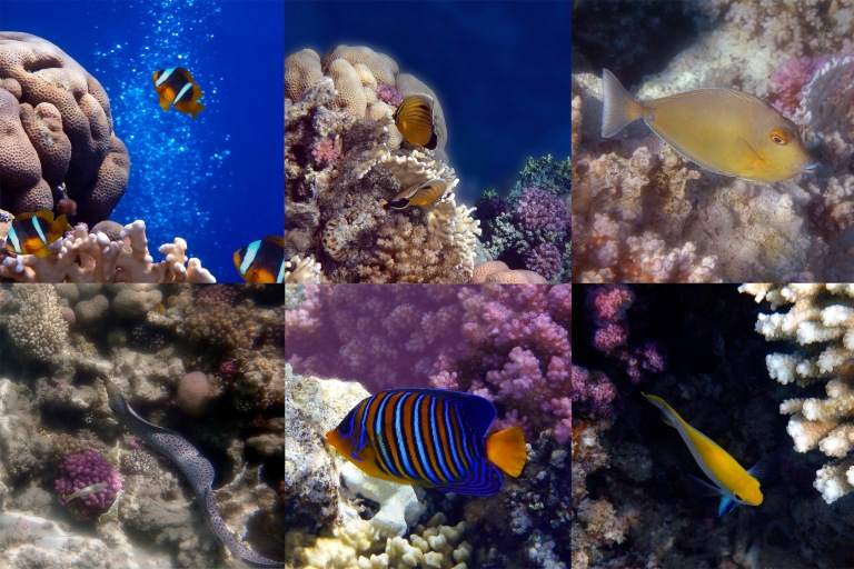 Wonderful Red Sea Sealife Collage.jpg